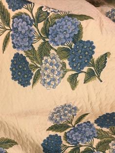 Blue Hydrangeas in a bunch