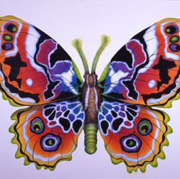 Psychedelic Butterfly_