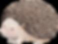 Dibujo del erizo
