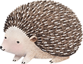 Drawing of Hedgehog
