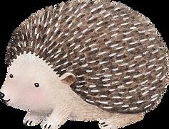 Desenho de Hedgehog