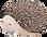 Drawing of Hedgehog