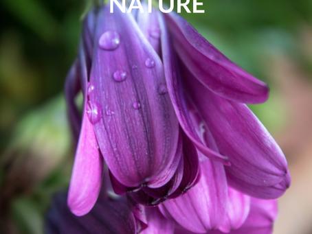 Compassion Nature - Issue 8
