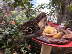 Butterfly Garden at the Insectarium