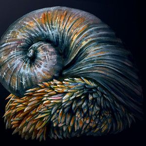 Scaly Footed Gastropod
