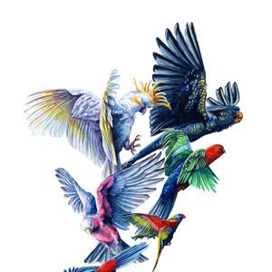 Brees Birds