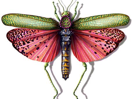 Another Locust!?!