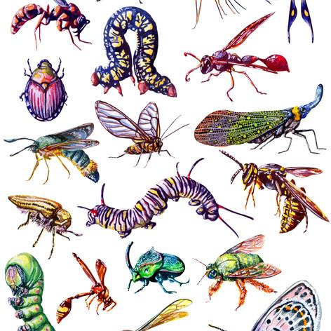 Assorted Bugs