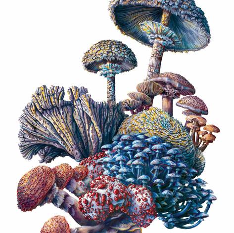 Mushrooms #2