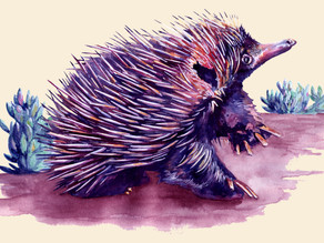 """I Am Not A Hedgehog"", The Echidna Story"