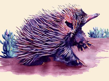 """I Am Not A Hedgehog"", The Echidna Story"