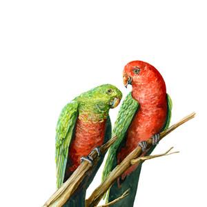 King Parrot Couple