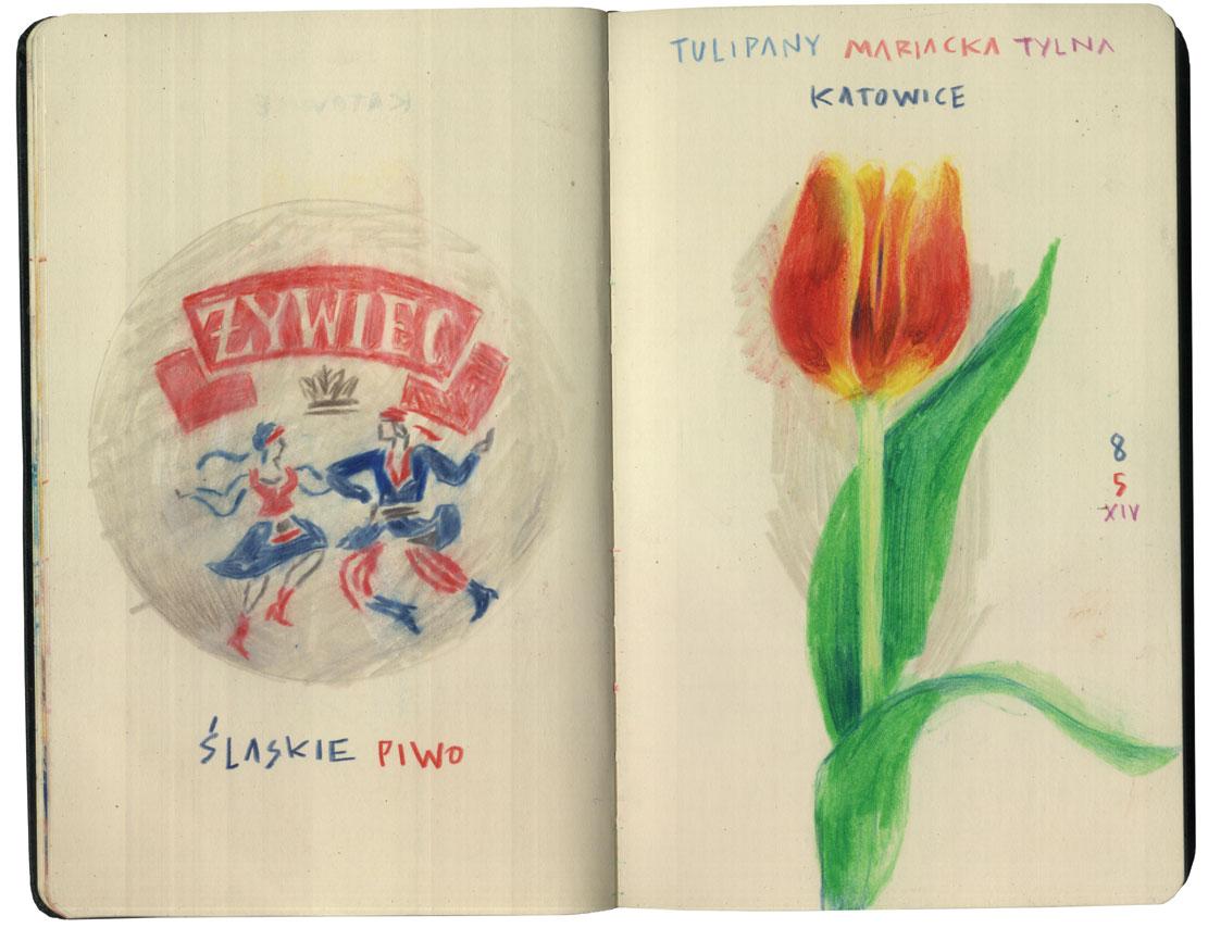 Zywiec & Tulip