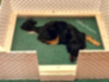 DelNova Hovawarts, Zoe in Whelping  Box