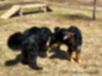 Priam and Zoe.jpg