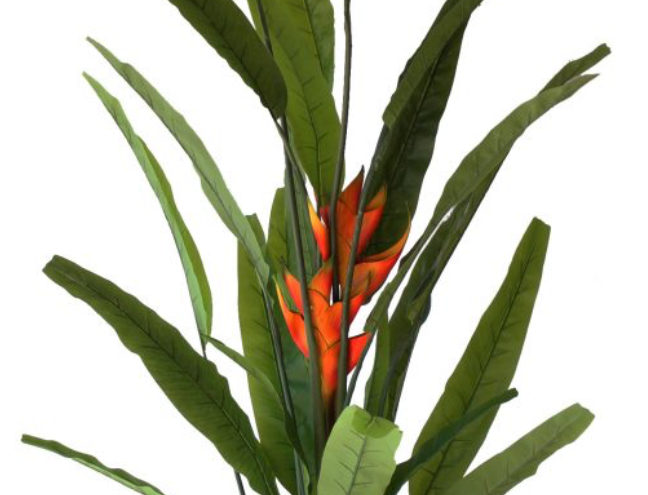 HELICONIA 1.8m