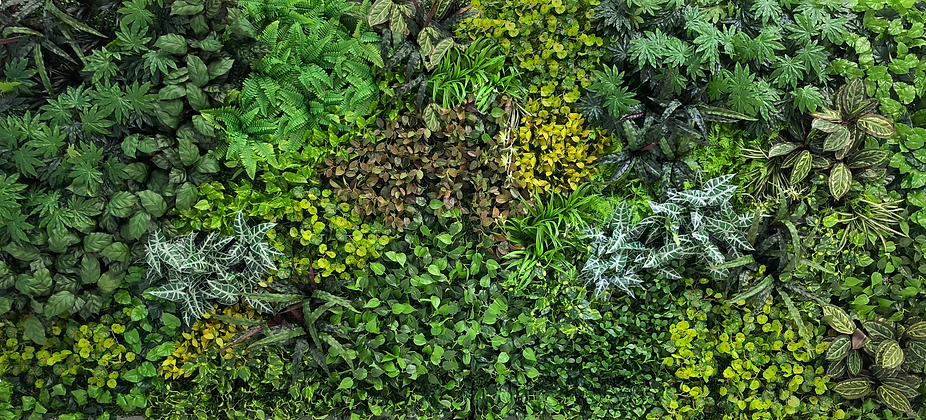 Greenery Wall copy 2.png