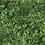 Thumbnail: Green Envy Wall