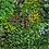 Thumbnail: Lush Wall