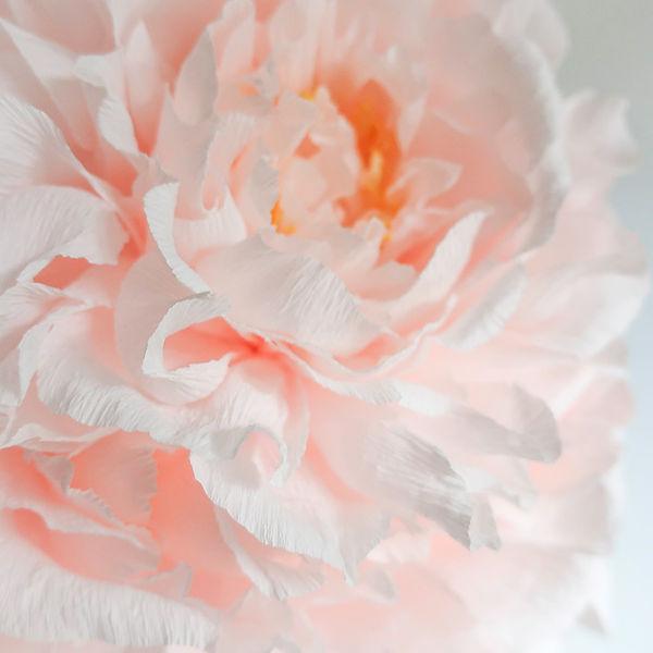 Pink Peony Single Stem - Instagram.jpg