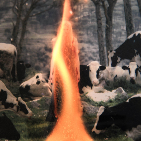 Burning Photograph 3