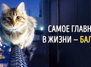 ФУНКЦИОНАЛЬНЫЙ ТРЕНИНГ (ФТ)