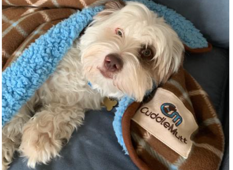 """CuddleMutt's """"give back"""" philosophy helps local rescues"""