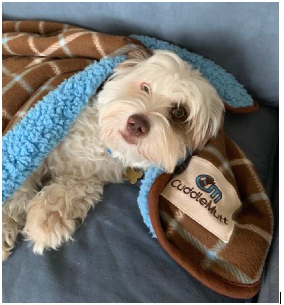 CuddleMutt blanket