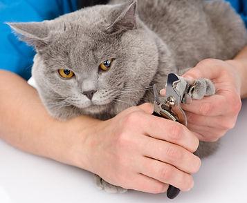 groomer cutting cat toenails