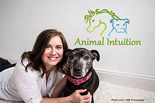 Animal Intuition