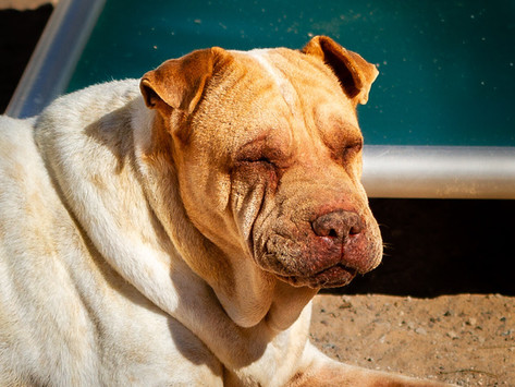 Pandemic Causing Dog Food Shortages at Barb's Dog Rescue
