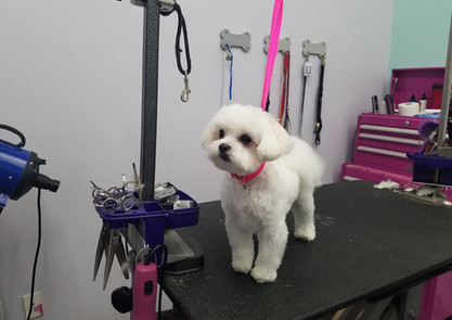 Dog groomed at Creative Paws Pet Grooming