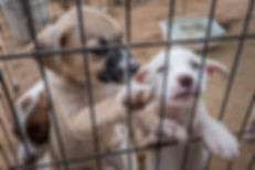 Puppies at Barb's Dog Rescue of Puerto Penasco