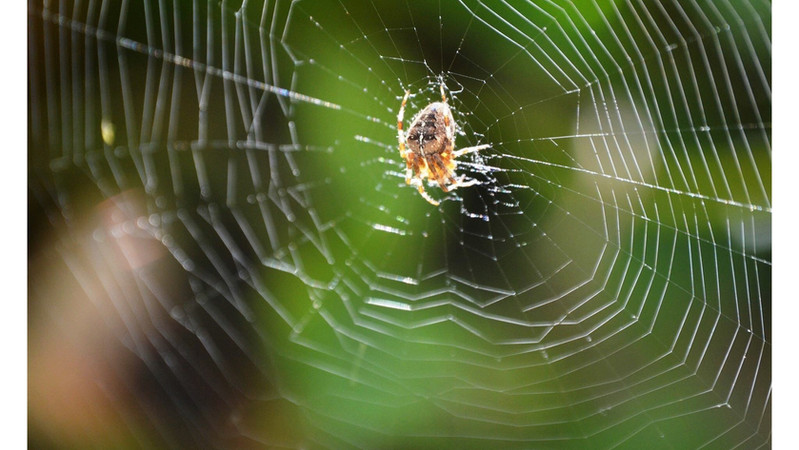 The Spider's Web