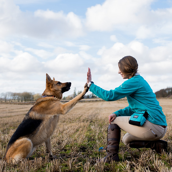April ADULT dog Class - NEWMACHAR - Morning session