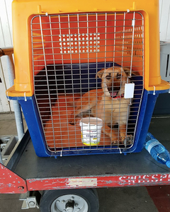 Kizzy in her travel crate
