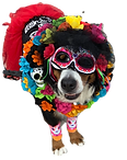 Trin day of the dead 2020_edited_edited.png