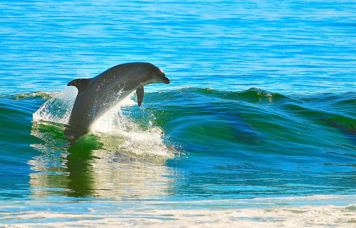 flip dolphin.jpg