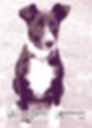 Eisha (born circa July 2013), the first canine Vectorpets spokesanimal