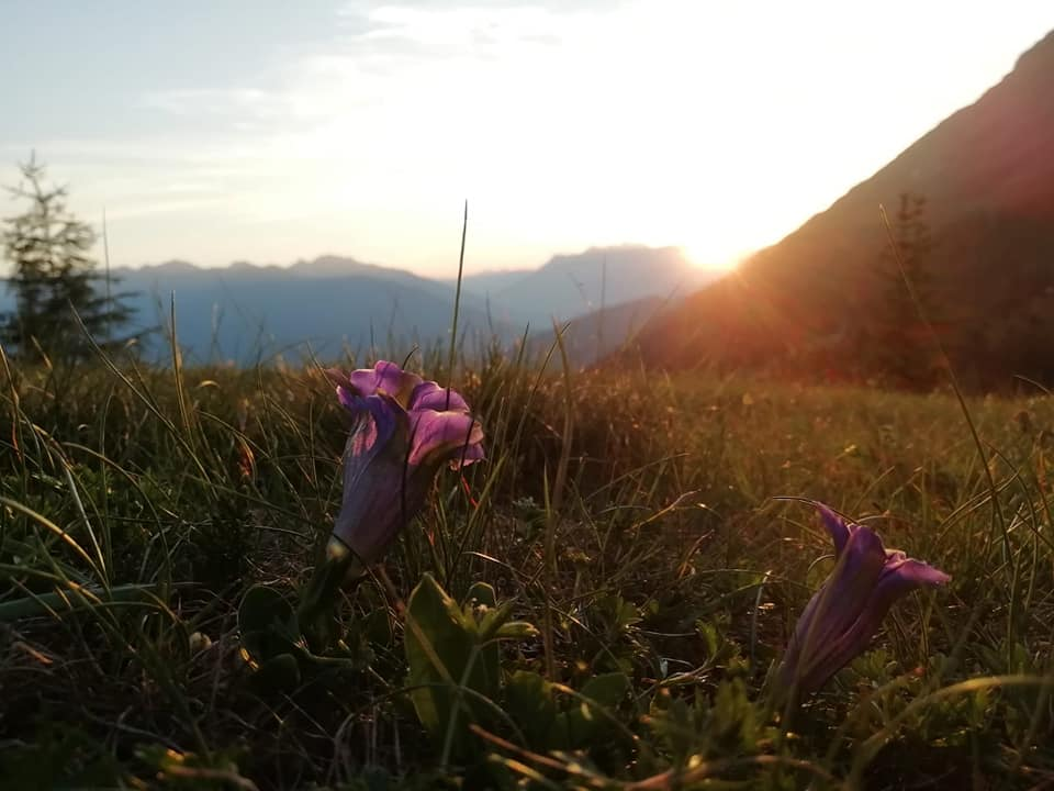 Abendstimmung am Kaunergrat - Apart Ferienglück | Kauns | Tirol