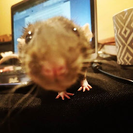_Hey hooman, stop writing and pay attent