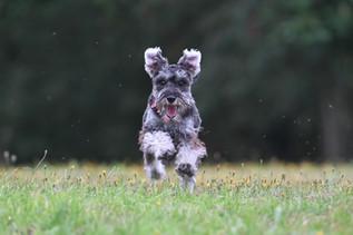 Full speed in the park