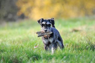 Fetching sticks