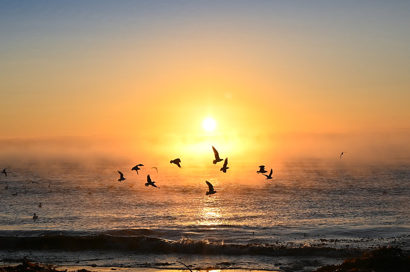 Flocking to the beach