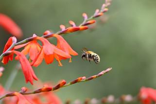 Hovering for pollen