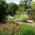 Gardens at the Springs Preserve