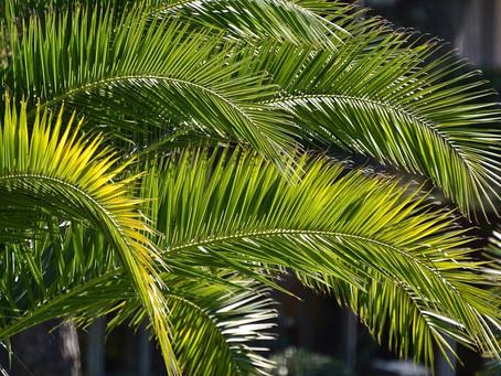 Keeping Sunday Holy - Palm Sunday, April 5, 2020