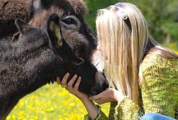 donkey 6c.jpg