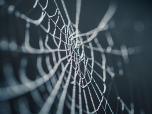 Exodus 23 - A Web of Destruction