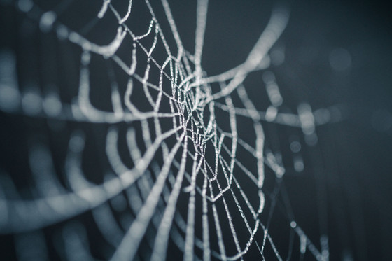 Spiders, broken tools and missed sales